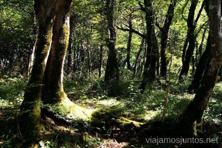 El bosque de Kolkhida, Kutaisi Itinerario de viaje por Georgia. 17 días. Gran Cáucaso Parte II Tbilisi Tiflis Kutaisi Vardzia Batumi la Playa Costa