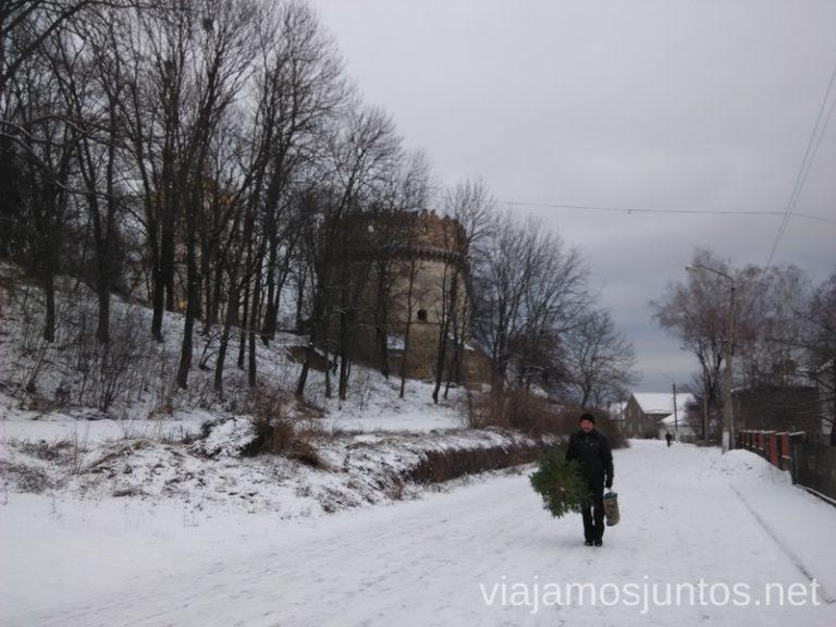 Un hombre lleva el árbol de Navidad a casa La situación actual en Ucrania