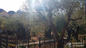 getsemani-garden