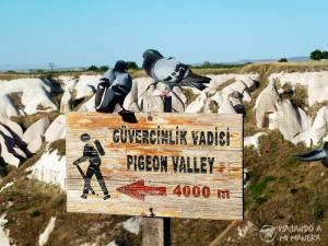pigeon-valley-01