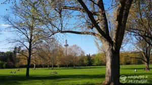 Grüneburgpark