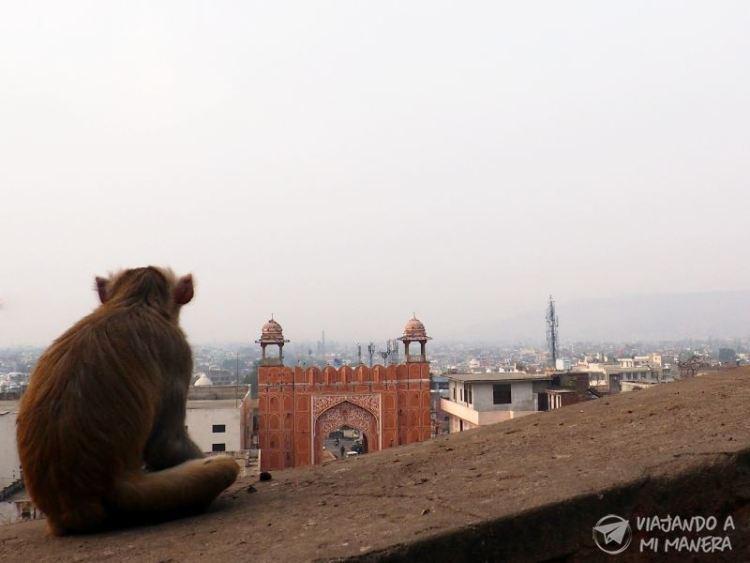 Qué ver en Jaipur, la ciudad rosa