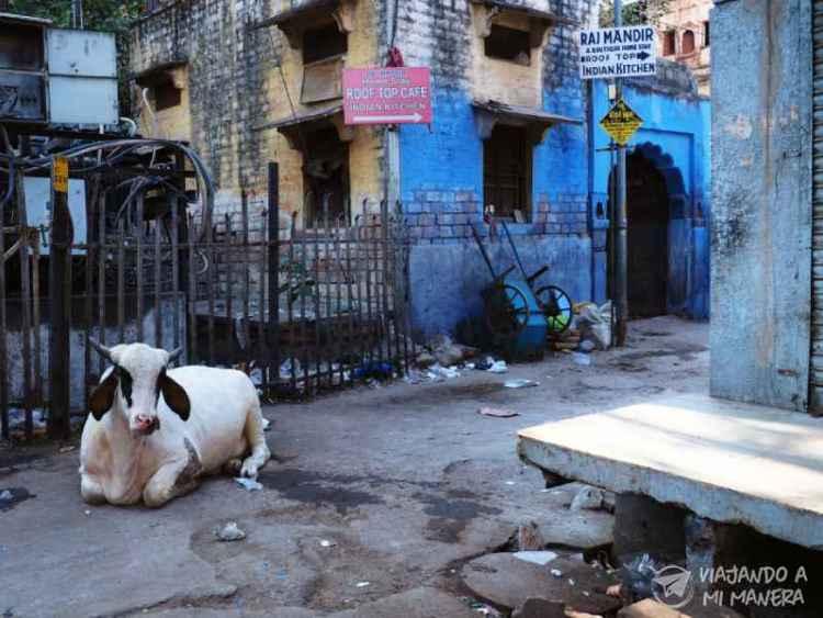 qué ver en jodhpur