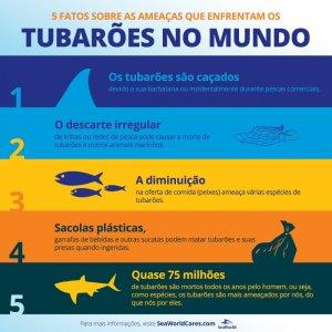 5 perigos que os tubarões enfrentam na natureza