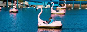 Flamingo Paddle Boats