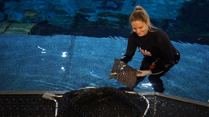 Animal care team member at Walt Disney World Resort