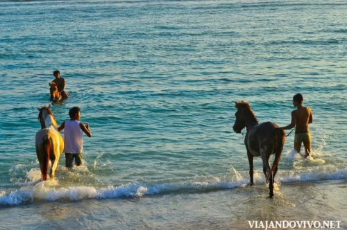 Caballos en el mar en una playa de indonesia