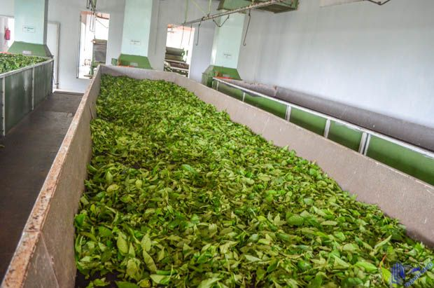 Interior da Fábrica de Chá em Mahe-Seychelles