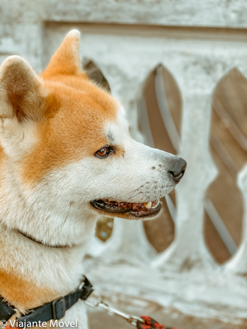 Trem Pet Friendly no Brasil - viaje com seu cachorro