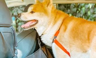 Viagem de carro com cachorro: Um guia especial pet friendly