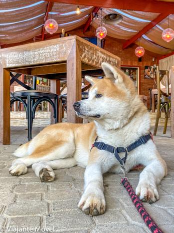 Onde comer com cachorro em Monte Verde