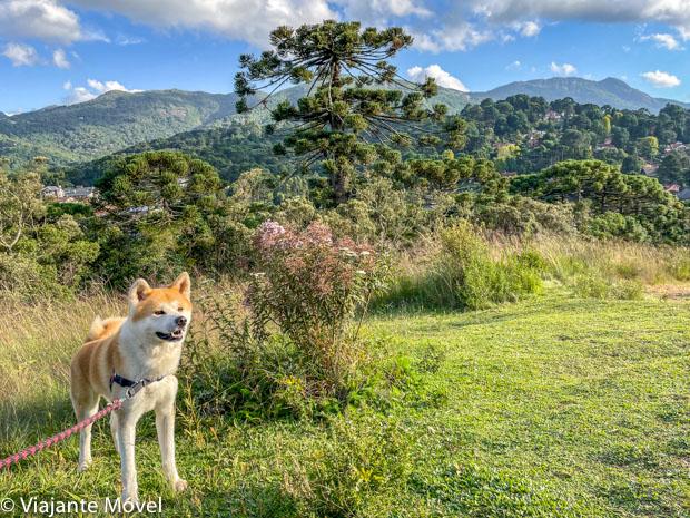 Trilhas com cachorro em Monte Verde