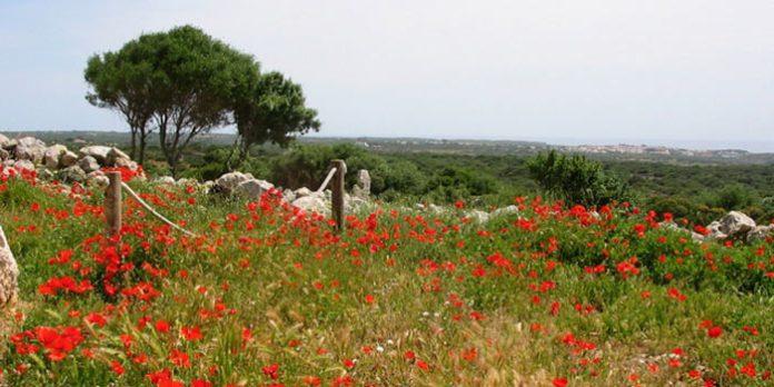 Flora de Menorca