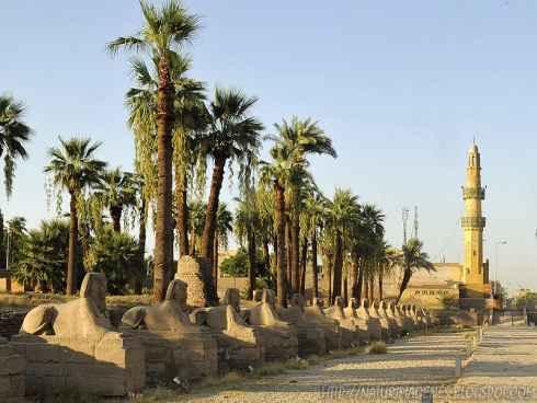 Egipto reabrirá la Avenida de las Esfinges en Luxor