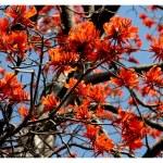 La Ruta de Las Amapolas en Bonao