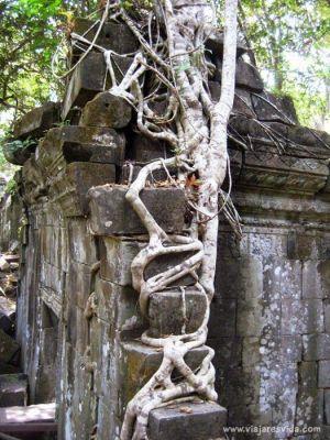 Raíces abrazando templo de Beng Mealea