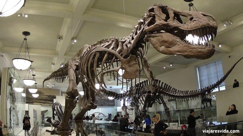 American Museum of Natural History. Qué ver en Nueva York en una semana