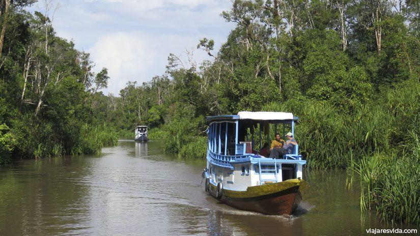 Klotoks en el río Sekonyer