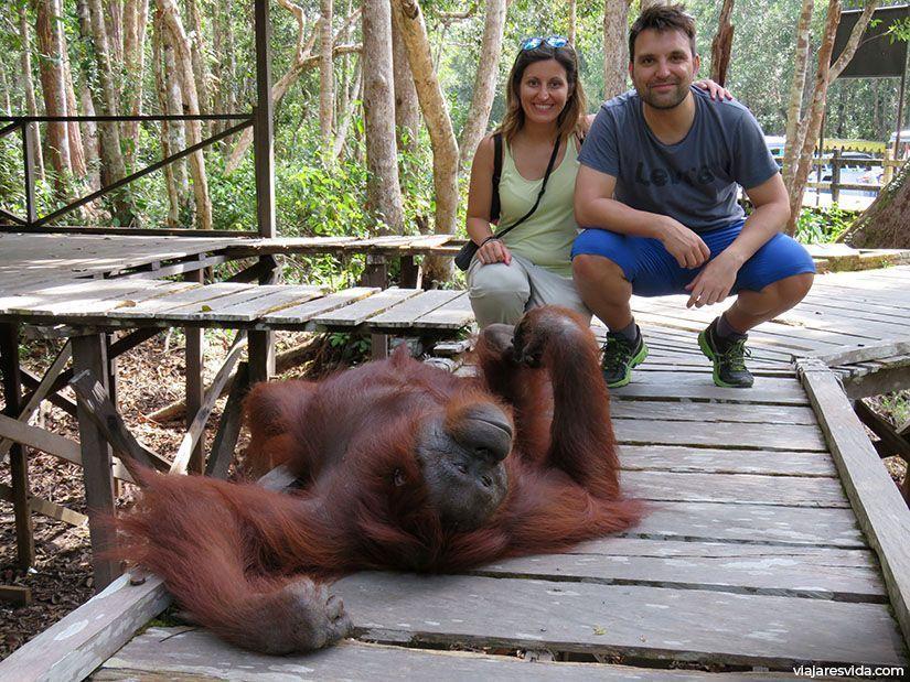 Es el orangután el que decide si le apetece dejarte pasar o no