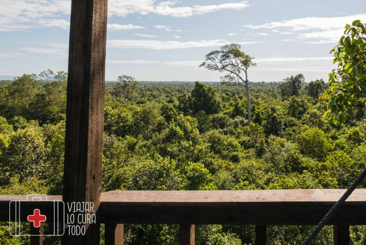 la jungla desde arriba