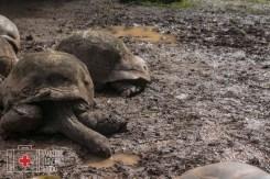 tortugas de tierra chamarel