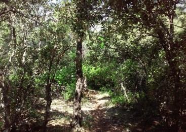 Un sendero mágico cercano a Siles