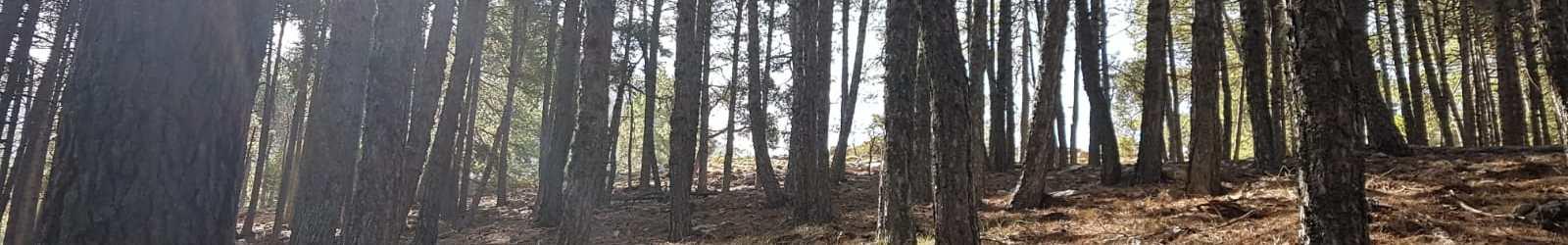 Se abre la inscripción para la ruta entre el Refugio El Sacejo a Cazorla