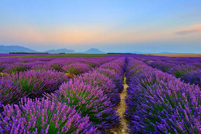 france-provence-stunning-landscape-with-lavender-field-at-sunset-plateau-of-valensole