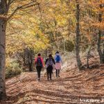 Bosques de hayas en Madrid y alrededores.