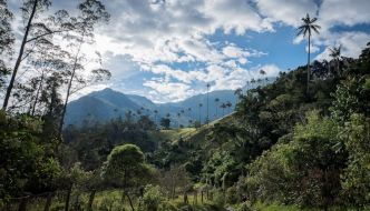 Valle del Cocora – Principal atracción en Salento.