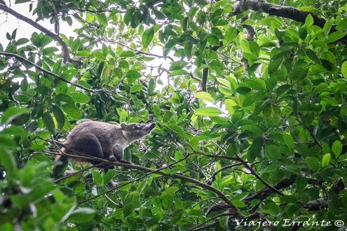 parque nacional de tikal guatemala