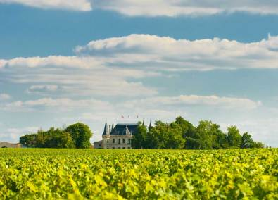 Wine yard Chateau Margaux