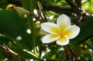 Oferta Viajes Isla Mauricio Viajes 3.0