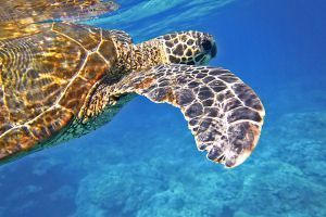 Viajes de Novios Polinesia Francesa