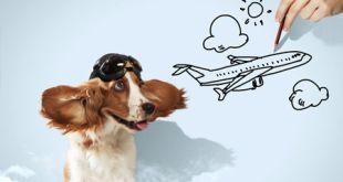 Reserva hoteles con mascotas para tus vacaciones de verano