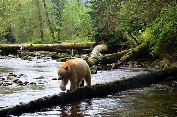 El Bosque del Gran Oso