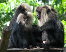 Ghats Monos