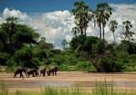 Que ver en Tanzania