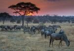Qué visitar en Tanzania