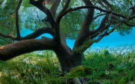 Aldabra en las Seychelles