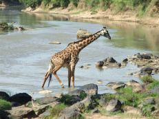 Serengeti-Jirafa