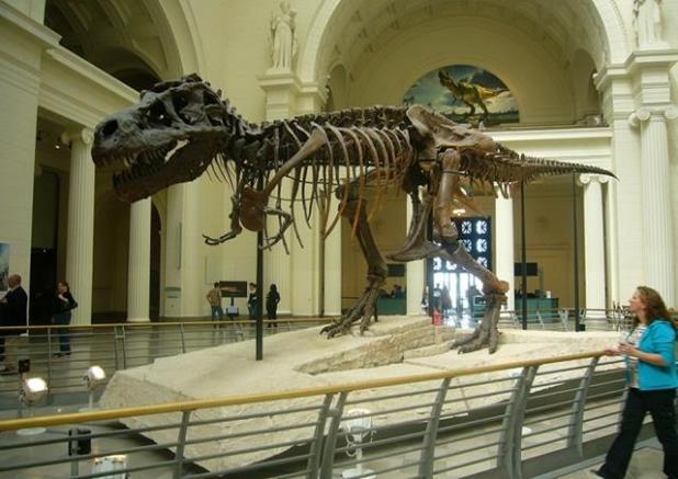 Tiranosaurio Rex Chicago