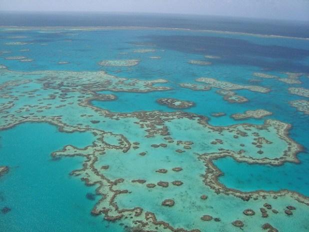 Submarinismo en la Gran Barrera de Coral