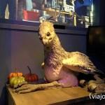 Buckbeak la mascota de Hagrid