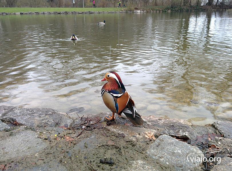 Munich - Englischer Garten