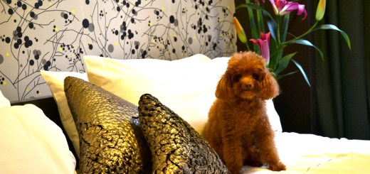 Esplendor Palermo Hollywood, un Hotel Pet Friendly