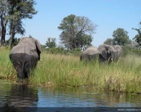 Delta Okavango barco