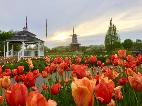 Tulipas em Holland, Michigan