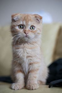 gatito - beneficios para nuestra salud