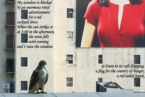 cocktail dress ad with red-tailed hawk and poem (photo by sabeth718 on Flickr)